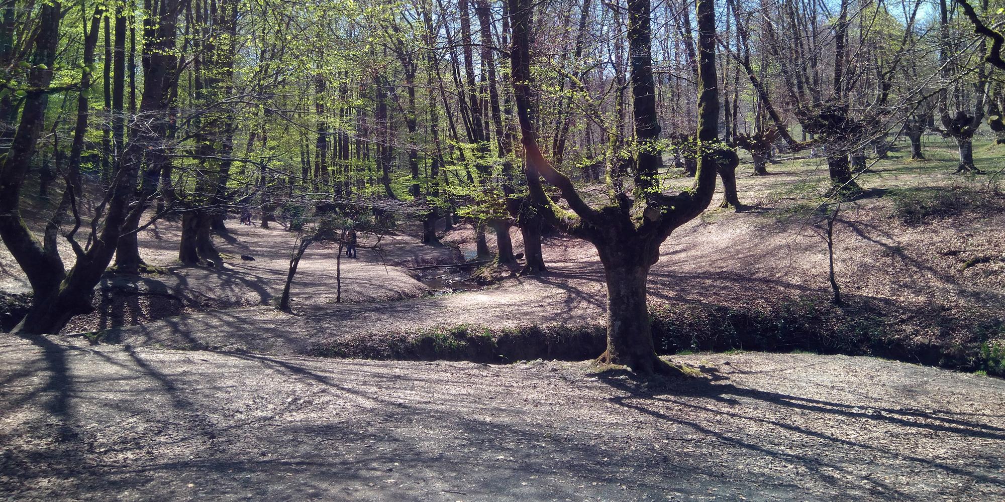 Hayedo de Otzarreta en el Parque Natural de Gorbeia (Bizkaia)