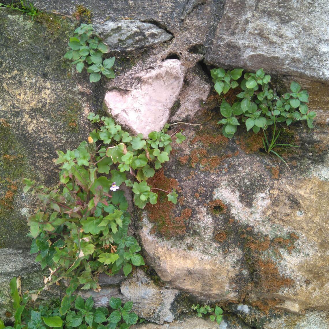 Vegetación espontánea en Algorta (Getxo, Bizkaia)